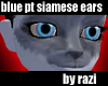 Blue Point Siamese Ears