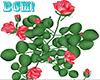 BCM! Rose Plant Pink