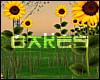 B♥ Sunflower Lake