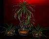 ~TQ~trio PlantsSet