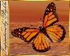 I~Garden Butterflies