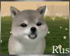 Rus: Shiba Pup 4