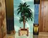 Beach Club Palm Tree