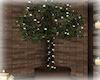 [Luv] CA - Tree
