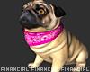 Elle-Pug Dog