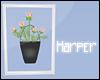 Framed Flower Bucket