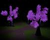 Romantic Night Forest