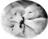 Wolf Family Kiss