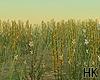 HK`Flowers Grass Ani