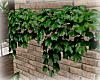 [Luv] IH - Wall Ivy