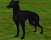 Greyhound Lurcher Black