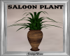 Rustic Saloon Plant