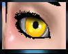 M * Angelic Eye Male