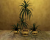 (T)Oriental Plant