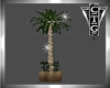 CTG PALM WITH LIGHTS