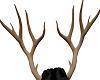 Clarice Antlers