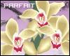 (*Par*) Vect. Orchids