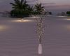 CD Beach, Wedding Tree