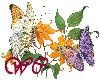 Butterflies & Flowers~