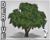 ~Oak Tree anim