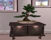 orient bonsai cabinet