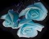 Blue Roses -1RT