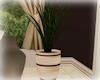 [Luv] 5B - Plant 3