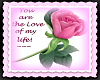 Ts Love of My Life Rose