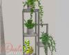 ID: Akoya room plants
