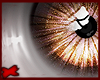 -A- Holli Eyes