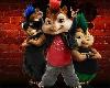 eekhoorn club 2