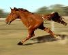 """[AR]Horse 2 legs """"FUNNY"""""""