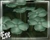 c Forest Primroses