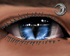 Feline Indigo Eyes M