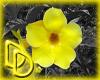 |DD| Flower Splash 3