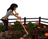 Pumpkin-Patch-Ani-Garden
