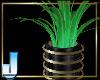 Finezza Plant