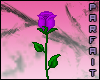 (*Par*) Purple Rose