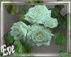 c White Rose Vines