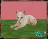 S. Kitten