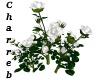 !White Roses