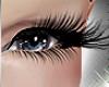 Lashes Eyeliner