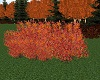 ATS~ Fall Scrub Oak