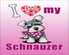 IvI Schnauzer Girl