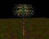 Christmas-Star-Palm-Tree