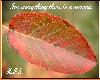 Autumn Seasons Sticker