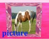 PP Paint Horse Picture