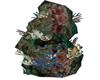 coral reef #21