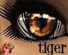 Wild.Eyes Tiger (f)