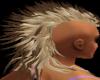 blond&brown tip hawk